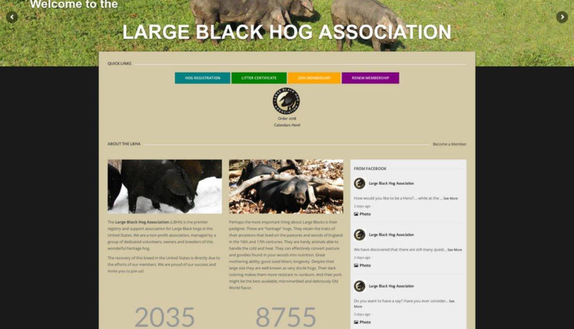 largeblackhogassociation